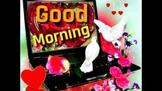 Good Morning Status  Good Morning Video  Good Morning Shayari  2020
