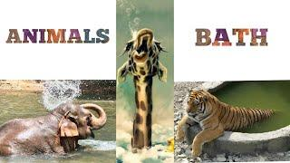 Animals for kids  | Animals Name | Animals bathing in water | Animals bathe | Day 19