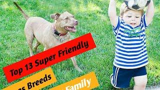 Top 10 Super friendly and Family dogs breeds for your family