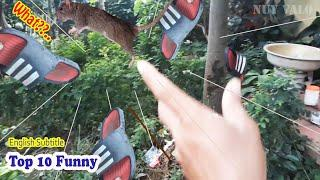 Top 10 funniest mouse traps, Top 10 funniest mouse trap moments | Nuy Valo