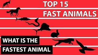 Top 15 Fastest Animals In The World