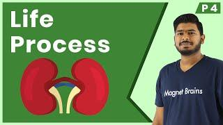 Life Process Class 10 | CBSE Biology | Excretion | Revision Series in Hindi | Magnet Brains