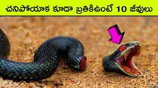 Top 10 Animals That Can Live After Death | BMC facts | Telugu
