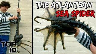 Top 10 Scary Biggest Insects Ever Found