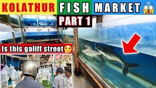 *New* Kolathur Fish Market Chennai   Galiff Street   Aquarium Fish Price India, Monster Fish Part 1