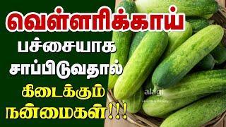 வெள்ளரிக்காய் மருத்துவ பயன்கள் | Top 7  health benefits of cucumber in Tamil - Tamil Health Tips