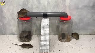Membuat perangkap tikus mudah # Top 10 Piège à souris
