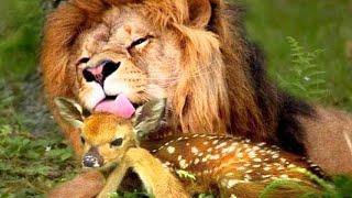 10 Animal Friendships You Won't Believe Exist...
