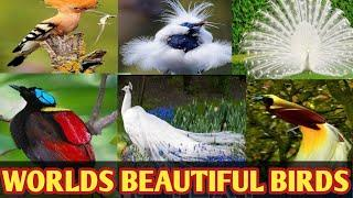 Worlds Top 10 beautiful birds | beautiful birds in the world | most beautiful birds in the world
