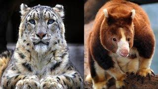 7 Animais Mais Bonitos Que São únicos No Mundo
