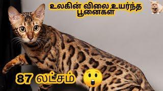 12 விலை உயர்ந்த பூனைகள் | 12 Most expensive cat breeds in the world in tamil | story bytes tamil