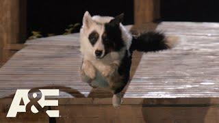 America's Top Dog: Underdog Team Maker Wins Our Hearts (Season 1) | A&E
