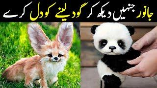 Top 10 Cutest Baby Animals Of The World | NYKI