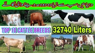 Top 10 Milk producing Cattle In the world||Interesting Information|| Secure Animals