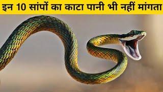 दुनिया के 10 सबसे ज़हरीले और खतरनाक सांप || Top 10 Most Venomous Snakes in the World
