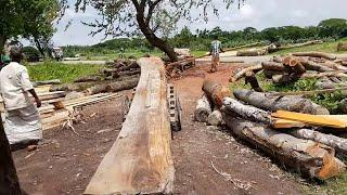 Long Teak Wood Slice Cutting at Logging Mill।BD Sawmill।Asian Teak Wood Cutting Sawmill