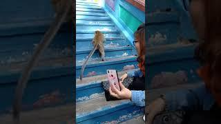 Monkey steal lipstick