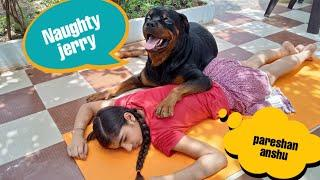 Naughty jerry is a thief||best protection dog breed|| best family dog breed.