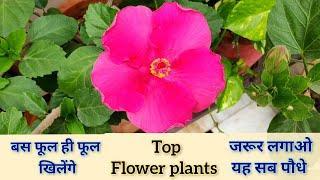 Top 10+ Permanent Flower Plants From My Garden Names, सालभर चलने वाले बेल पौधे