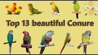 Top 13 beautiful Conure Types & Info | India 2020 Price List | Conure Types | WinNest Birds | Tamil