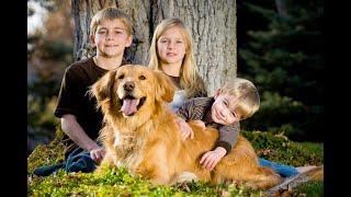 Top 10 most family friendly dog breeds