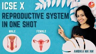 Reproductive System in 1 Shot | Male and Female Reproductive Systems | ICSE Class 10 Biology Vedantu