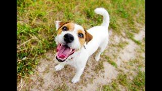 TOP 10 dog barking videos. Funny dogs
