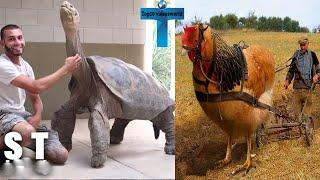Top 10 Unbelievable Biggest Animals In The World - Giant Animals Caught on Camera