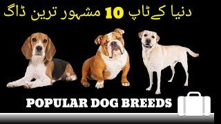 Top 10 Popular Dog Breeds of World l Most Famous Dog Breeds l Best Dogs l Wonderful Dogs l Dog Types