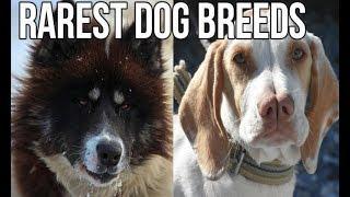 TOP 10 Rarest Dog Breeds | Rare Dog breeds | pets & animals point: